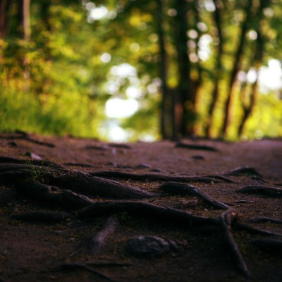 Landscapes_nature_trees_forest_roads_macro_roots_1920x1200