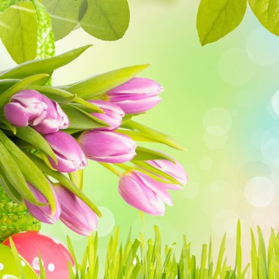 flowers_tulips_grass_leaves_spring_eggs_Easter_1920x1200